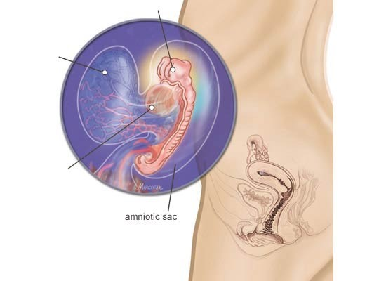 Pregnancy Week 6 Pregnant Woman And Infant Anatomy