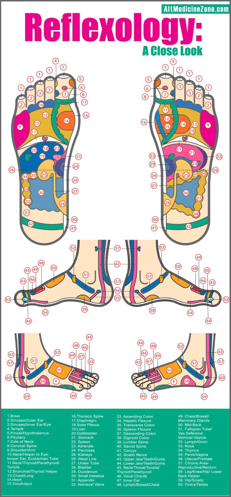 Reflexology Of Foot Diagram