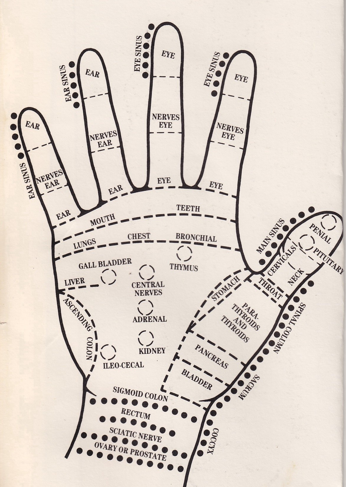 Reflexology On Hand