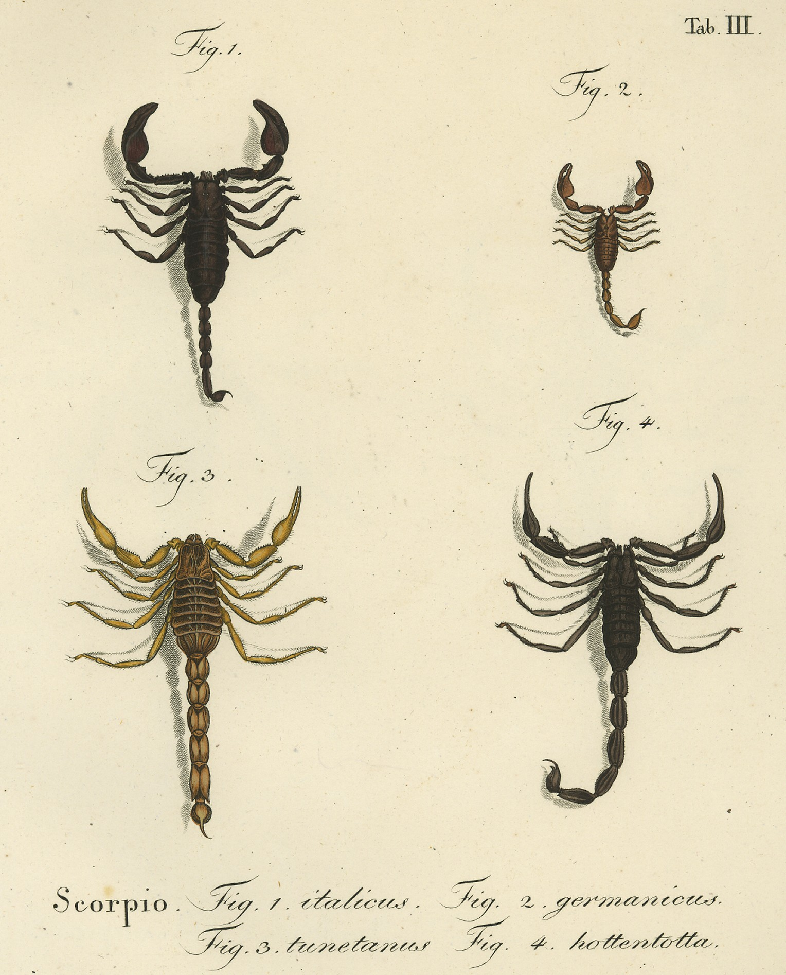 Scorpions Different Types of Diagram