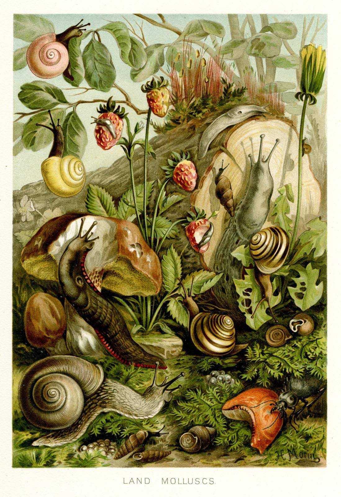 Snail In The World Diagram