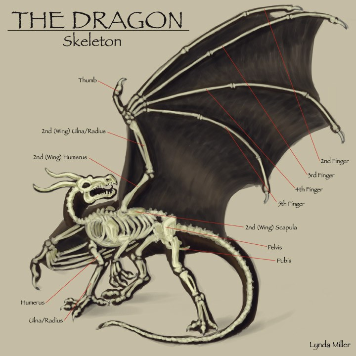 The Dragon Skeleton Anatomy Gross View