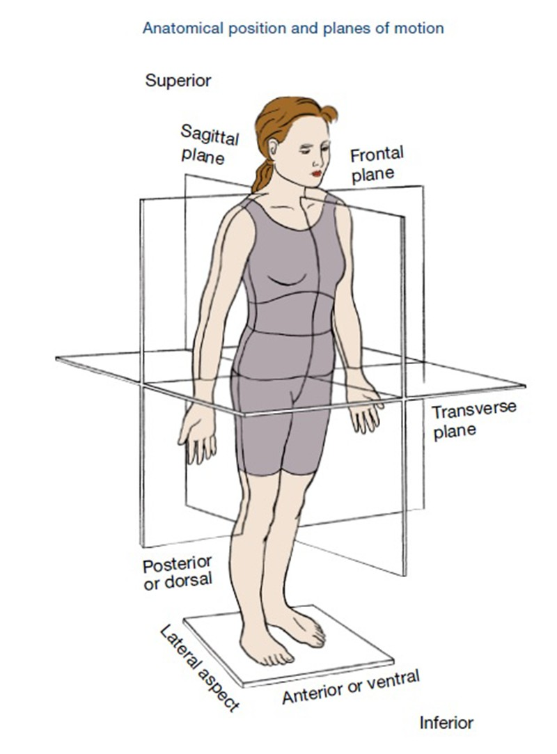 Anatomical Position And Planes Of Motion