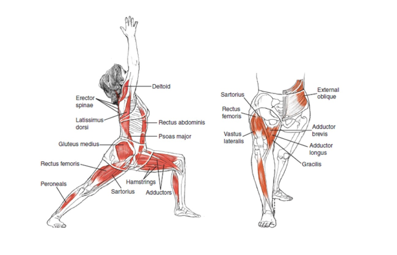 Body Lunges Workout And Muscle Effection
