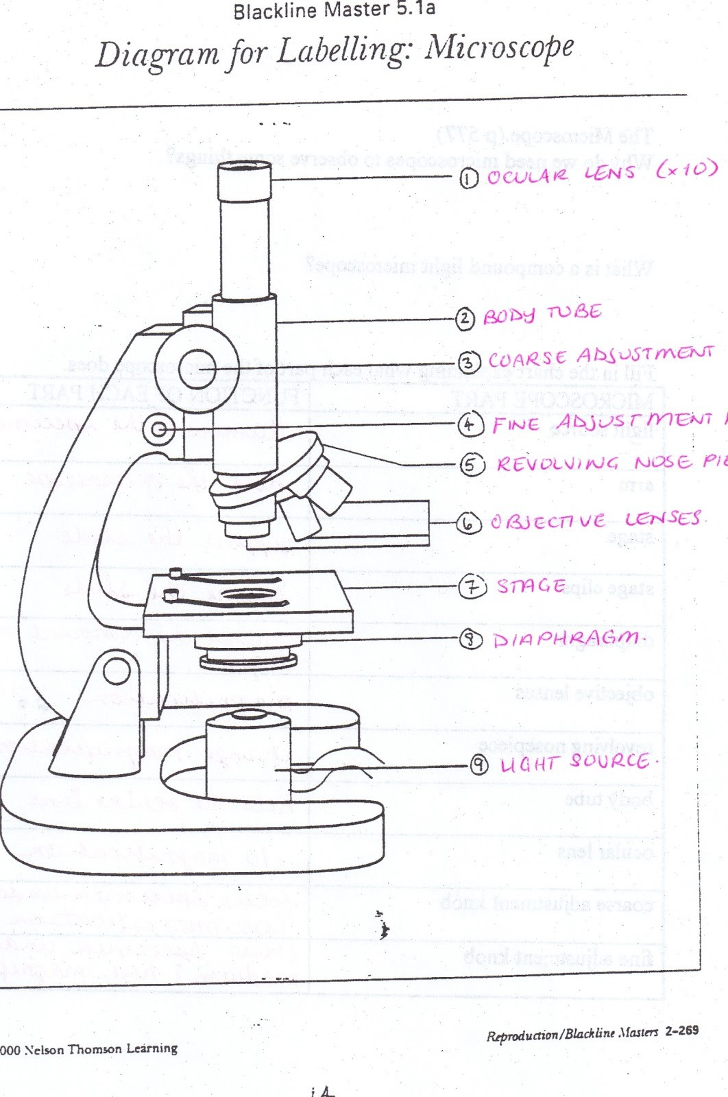 Microscope Structure Anatomy