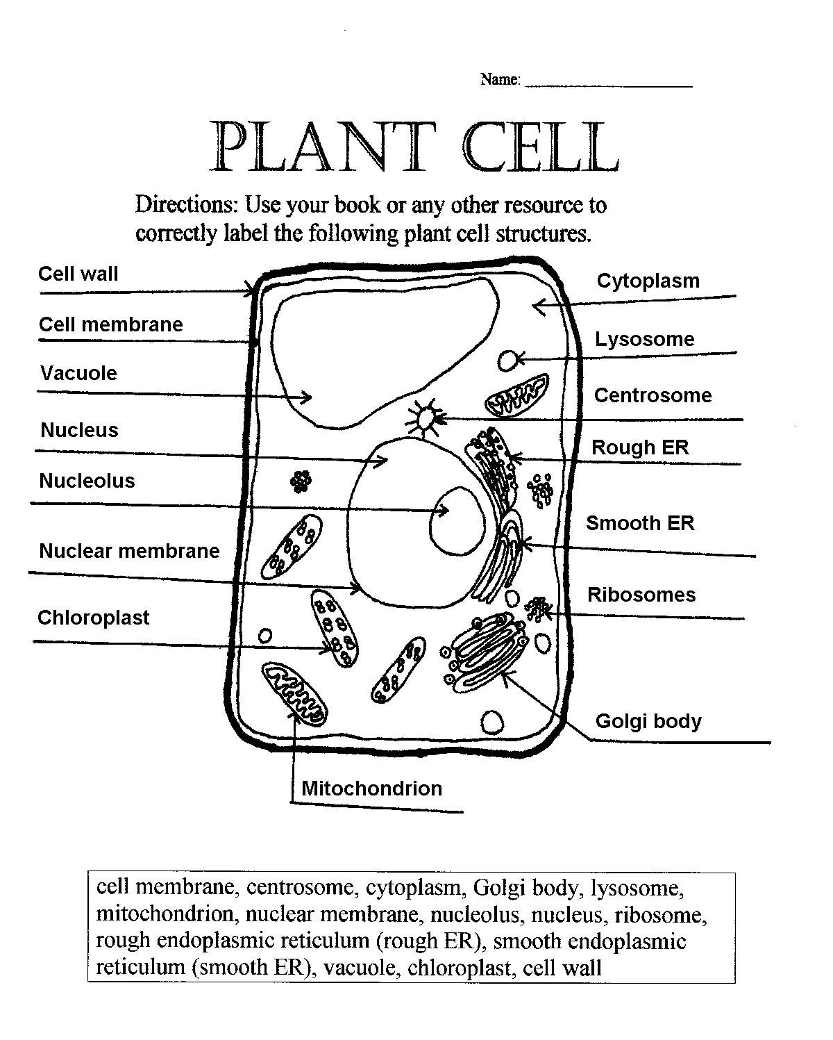 Plant Cell Diagram Label