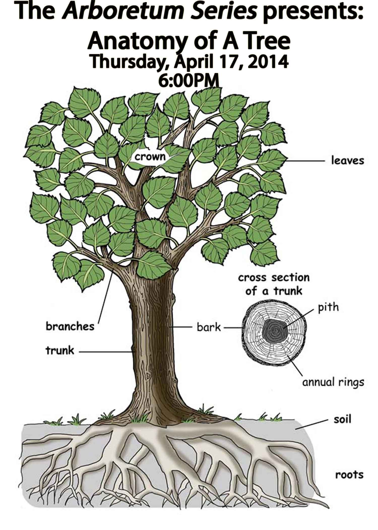 Anatomy Of Tree