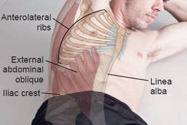 Anterolateral Ribs, Linea Alba Anatomical Landmark