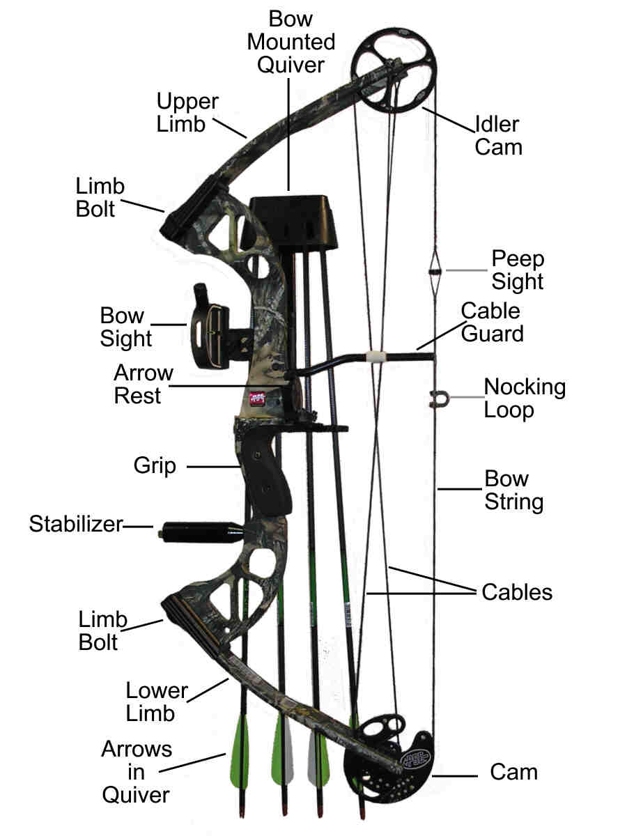 Bow Anatomy