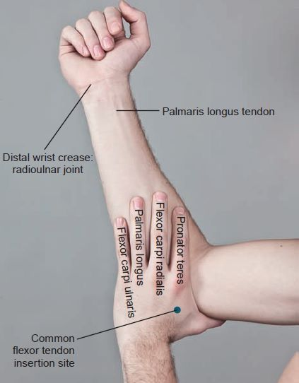 Easy Way To Learn Upper Distal Extremity Anatomy