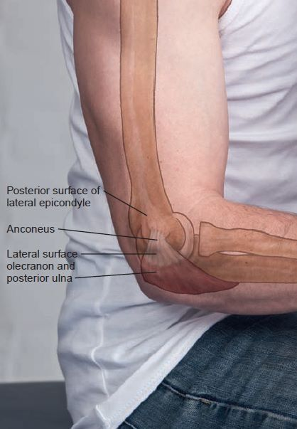 Posterior Surface Of Lateral Epicondyle Anatomical Landmark