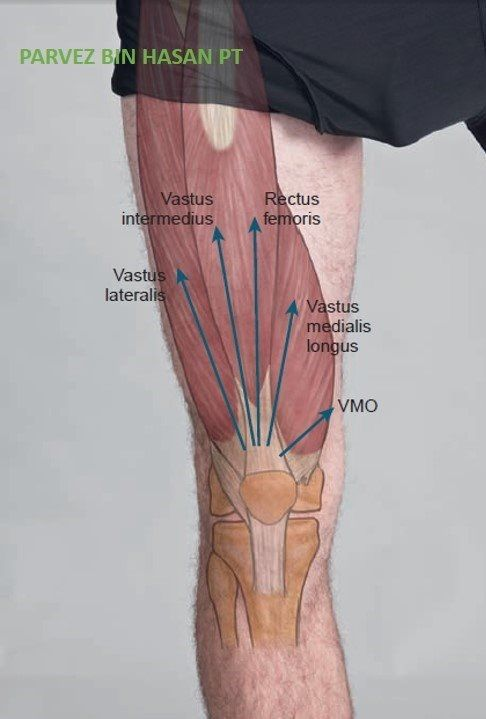 Lower Extremity Muscles Anatomical Landmark