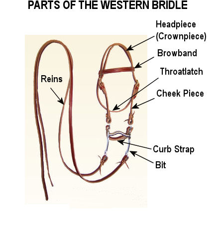 Western Bridle Structure