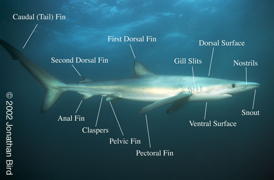 Shark In Real View