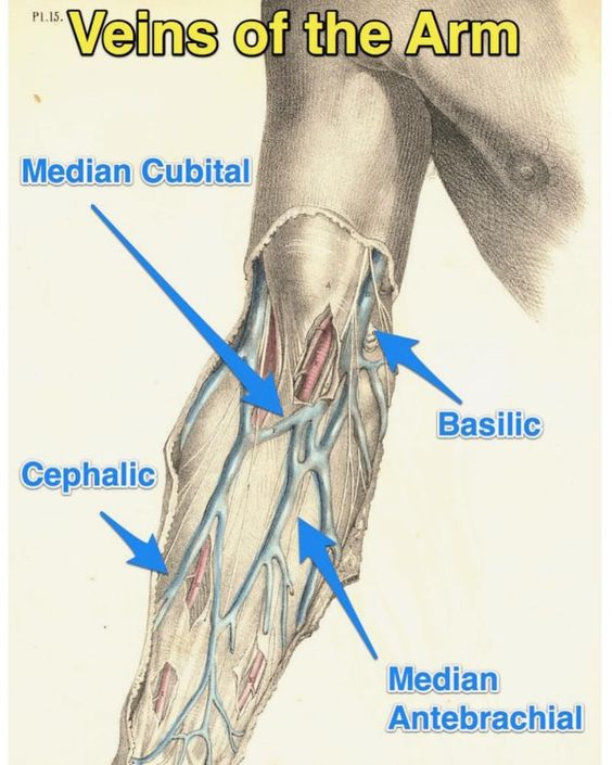 Veins Of Arm