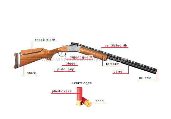 Shotgun Anatomical Structure