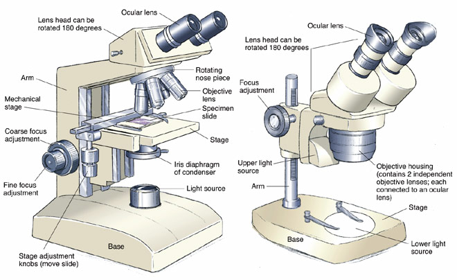 Microscopes Structure
