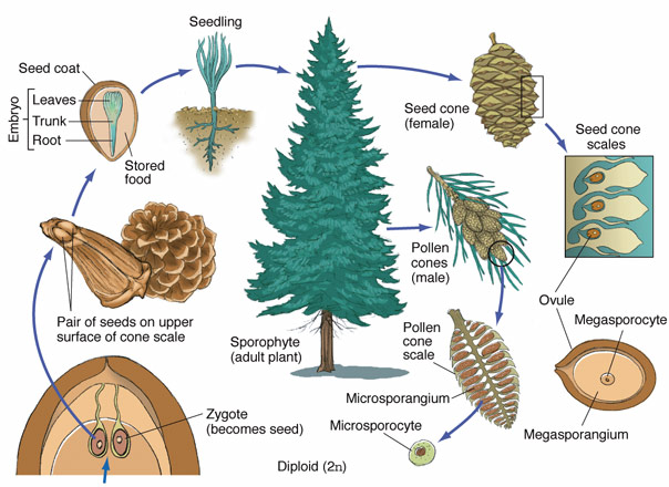 Tree Anatomy In Detail