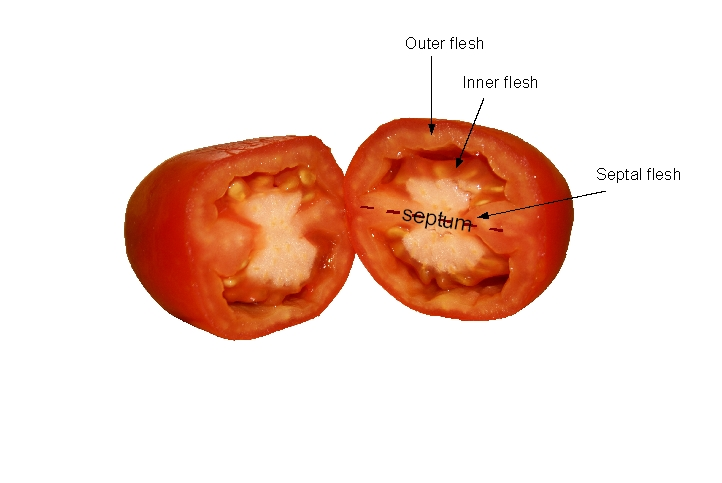 Tomato Internal View
