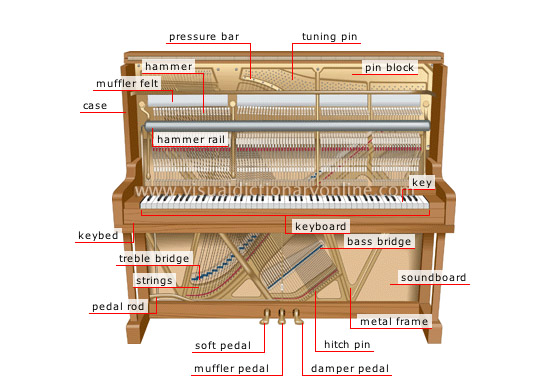 Piano Anterior View In Detail