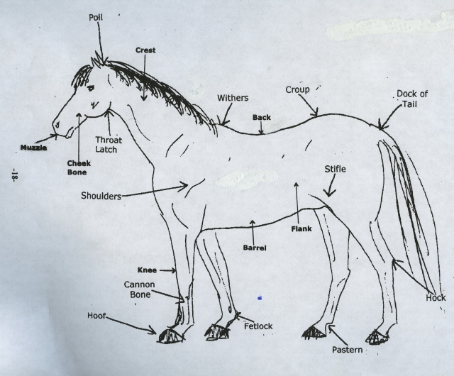 Horse Body Parts Name