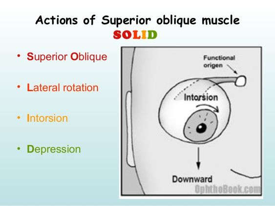 Actions Of Superior Oblique Muscle Chart