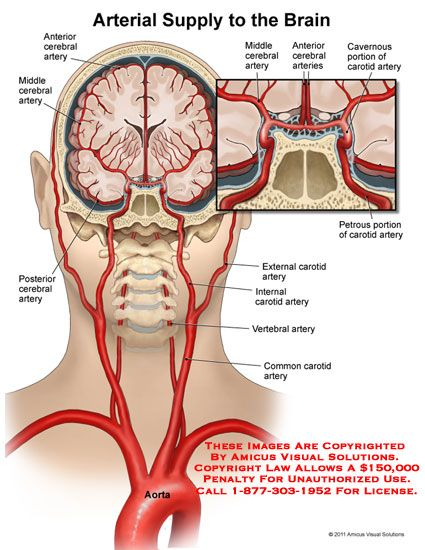Artery Supply To The Brain Diagram