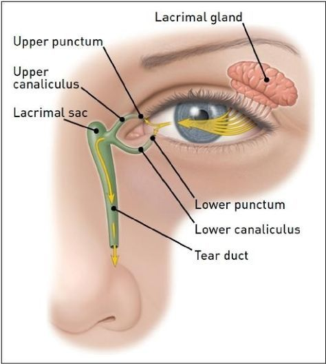 Lacrimal Gland And Lacrimal Sac Anatomy