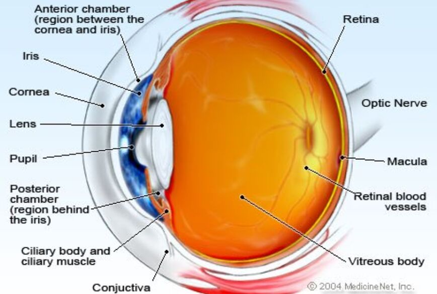 Ciliary Body Location In The Eye Diagram
