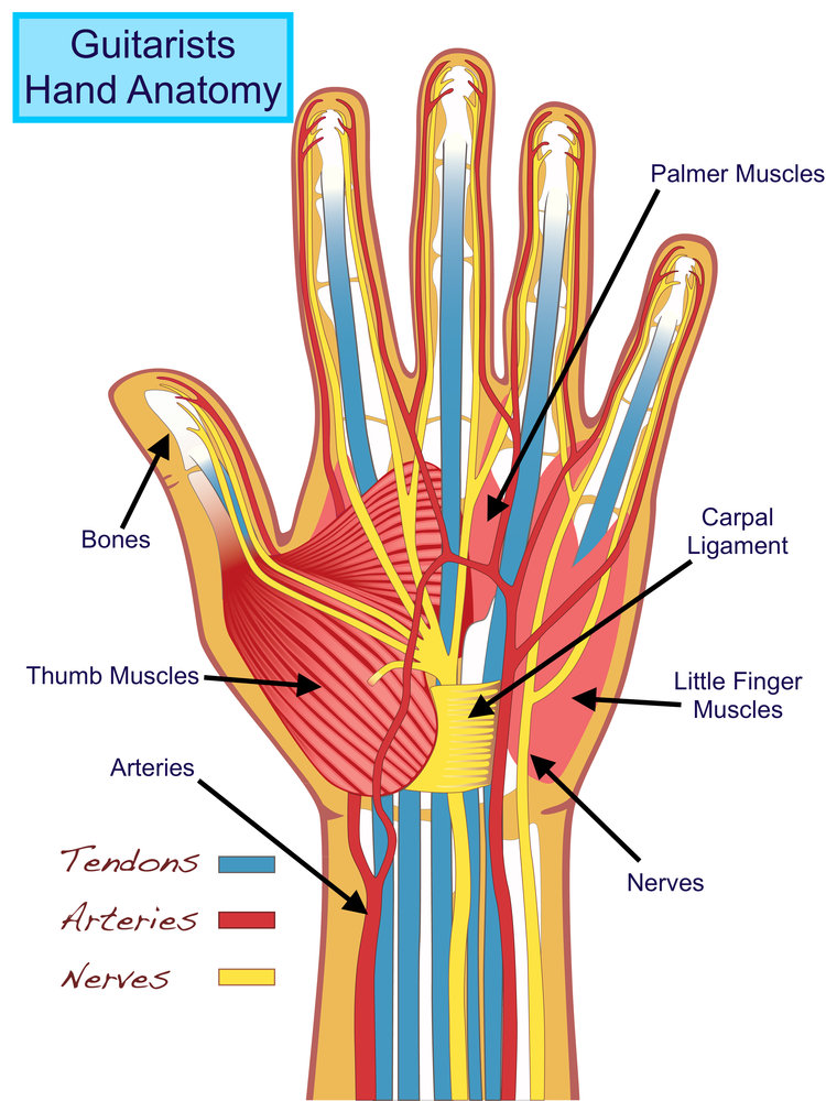 Guitarists Hand Anatomy