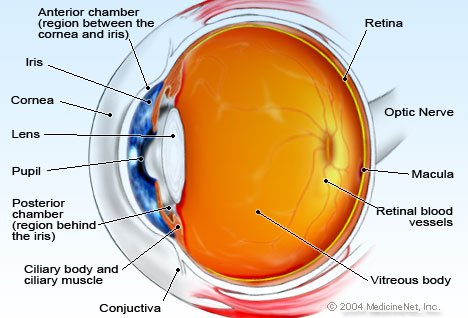 Picture Of Eye Anatomy Detail
