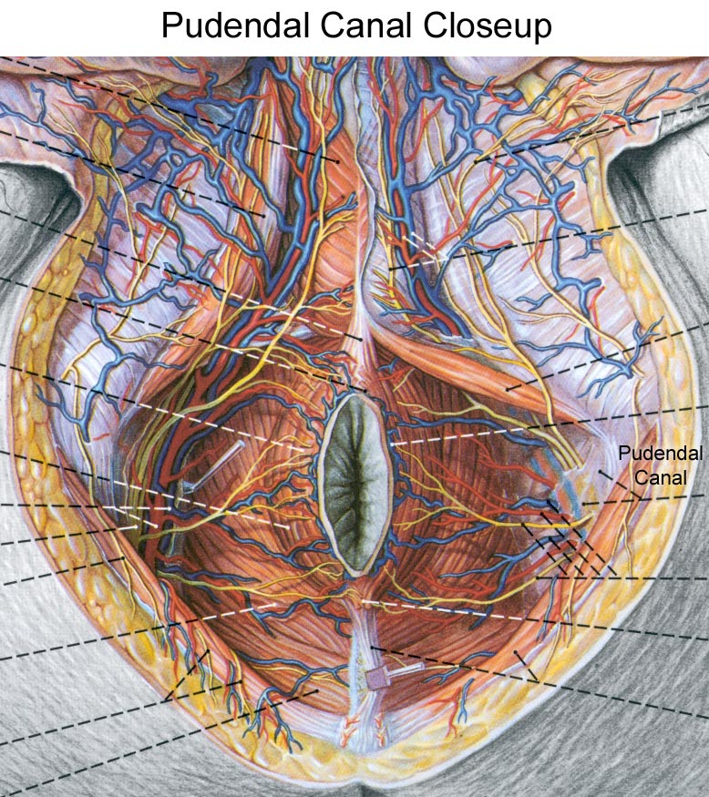 Pudendal Canal Closeup Diagram
