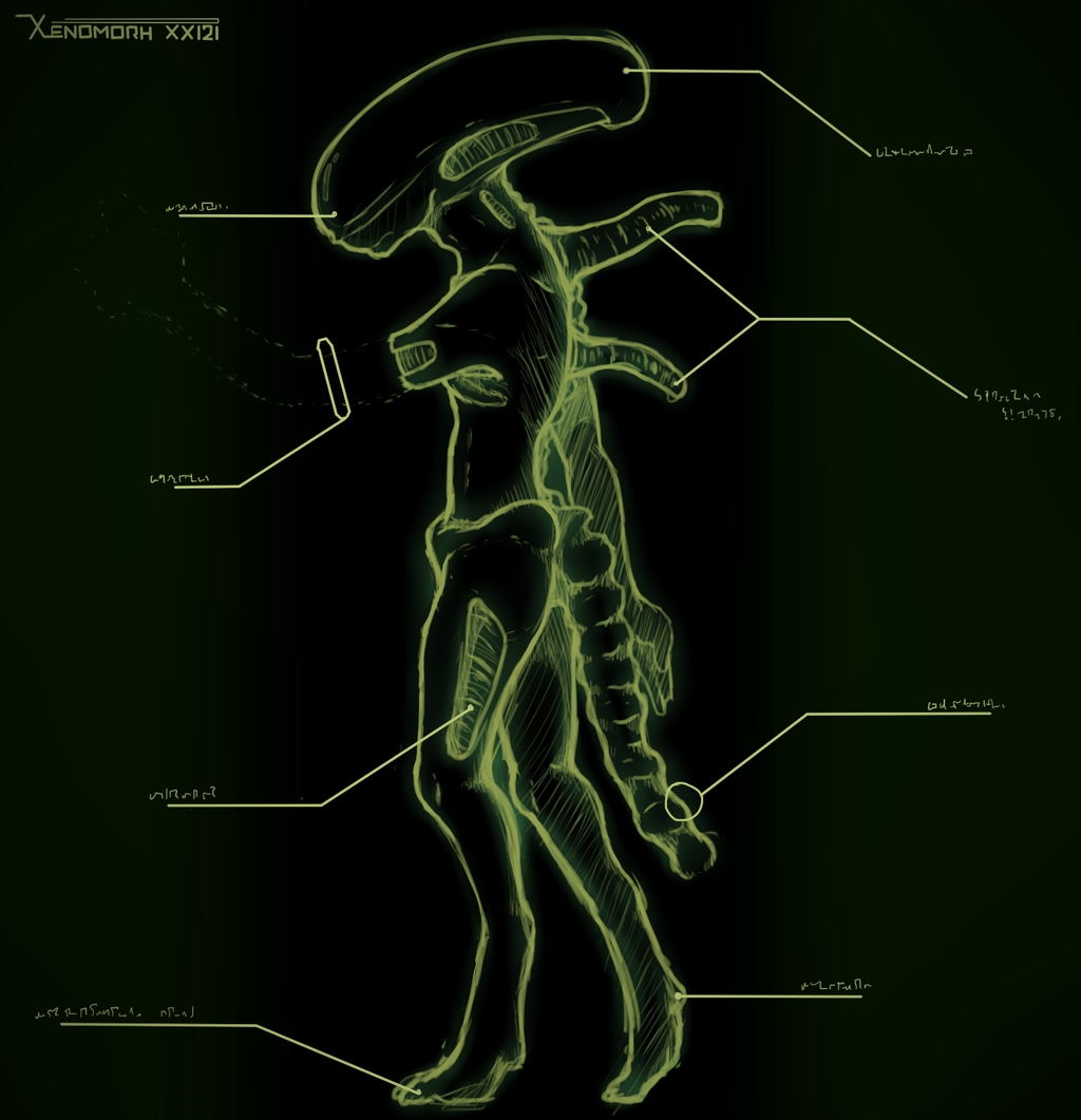 Xenomorph Anatomy Lateral View