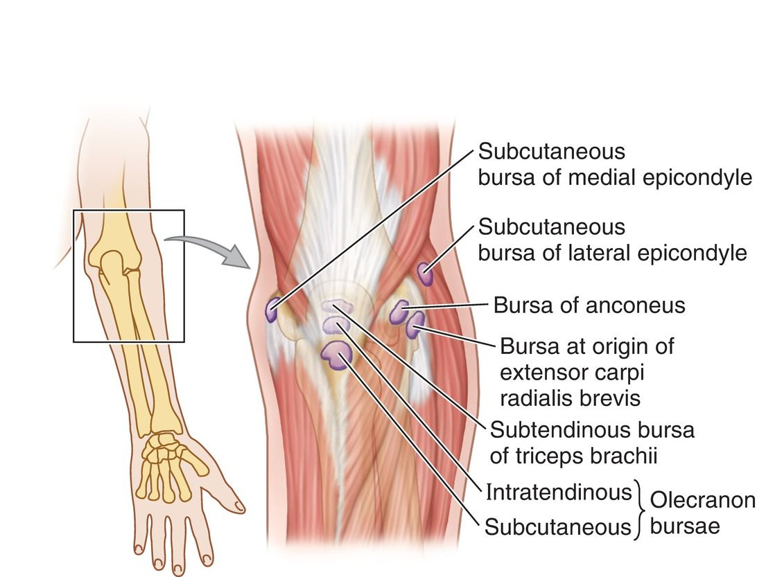 Bursae Around Elbow Joint