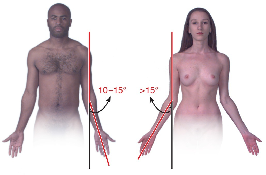 Carrying Angle Of Elbow Joint