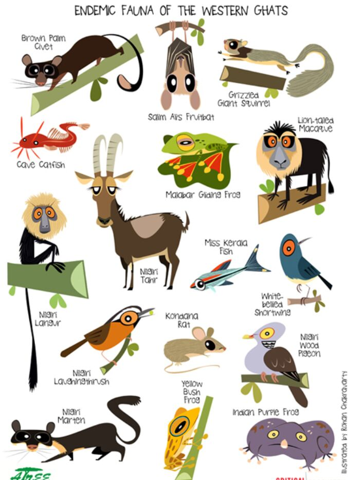 Endemic Fauna Of The Western Ghats