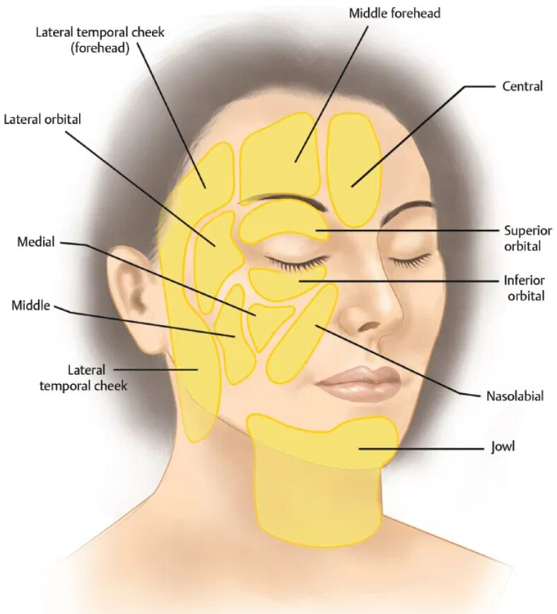 Face Anatomical Region Terminology