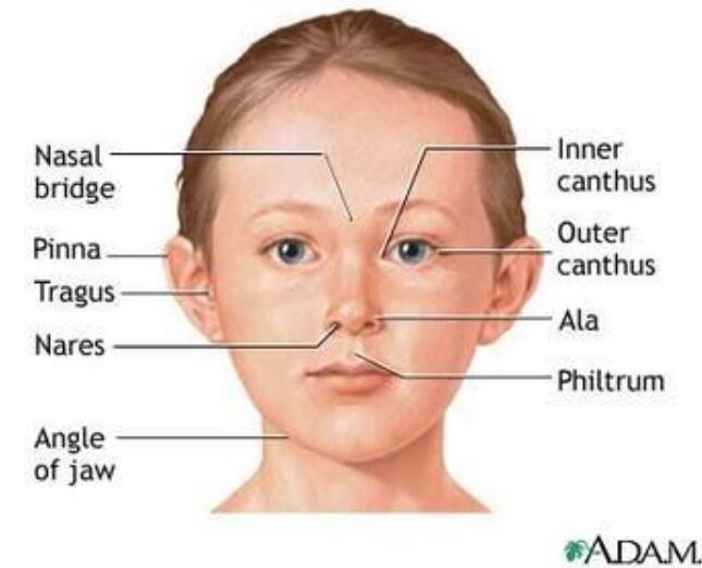 Face Parts Name