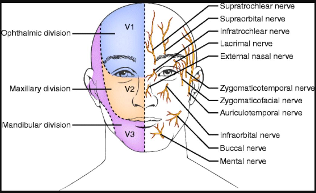 Head And Neck – Scalp, Ophthalmic, And Cervical Nerve Blocks