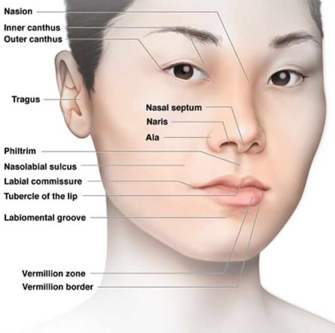 The Human Face – Facial Landmarks